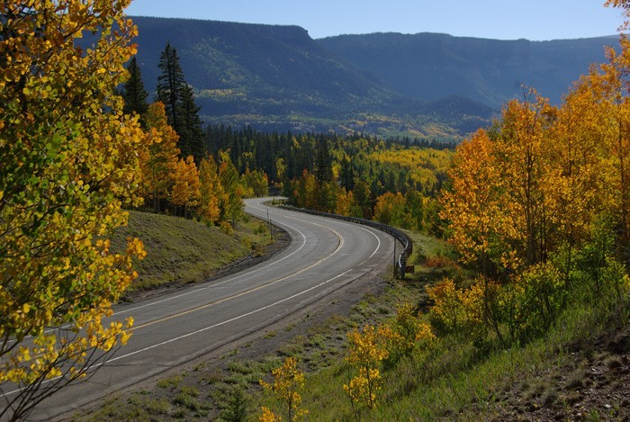 Aspens on Highway 149 - Robert Seago