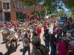 Creede Donkey Dash 2017 B4Studio