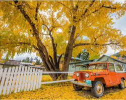 Downtown Creede Fall Colors (photo by Brandon Jennings)