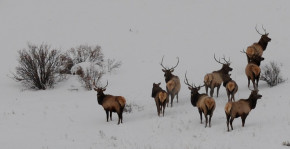 kw-photo-of-bulls-winter
