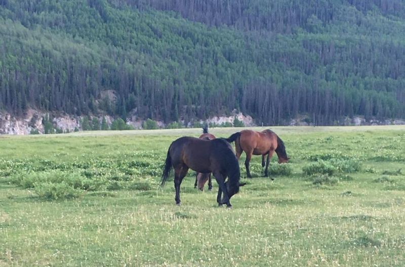 horses-e1515771640293-1024x677